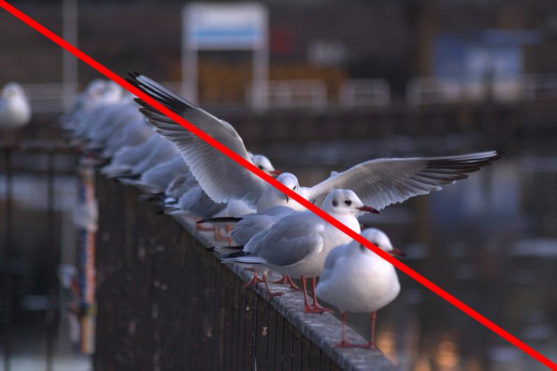 対角線構図の鳥