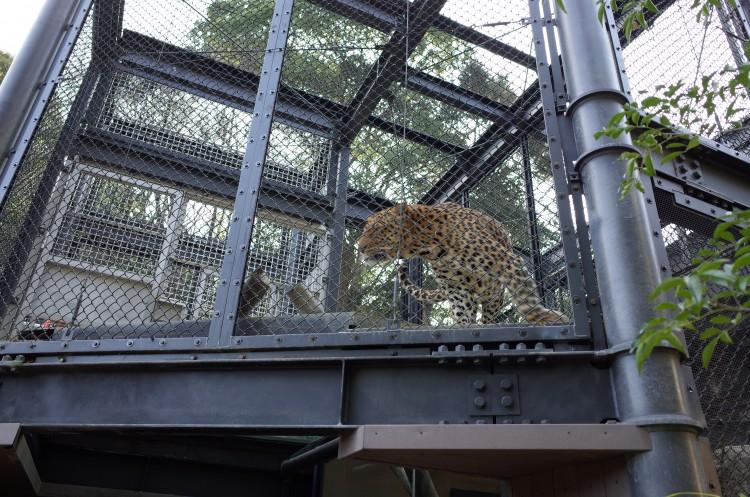 Ricoh GRで撮影した豹