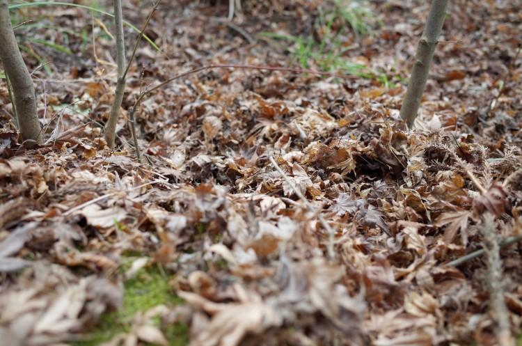Ricoh GRで撮影した落ち葉