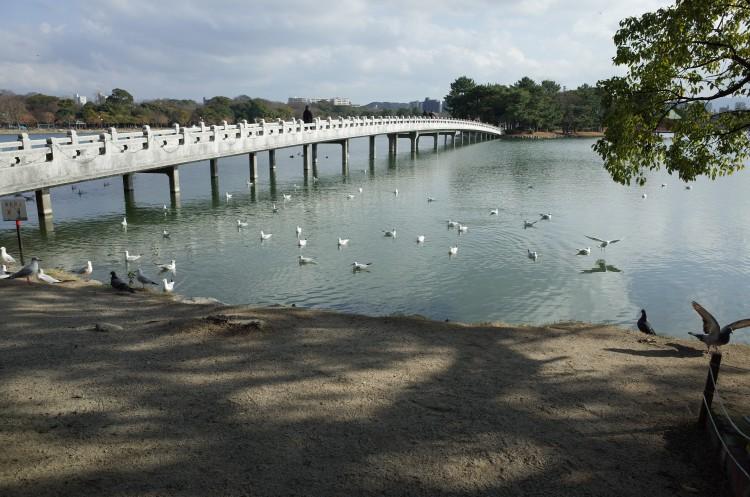 Ricoh GRで撮影した公園の鳩
