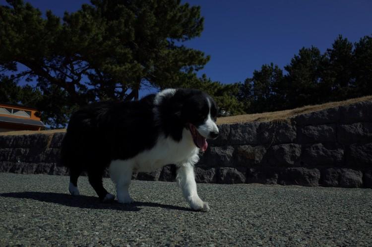 Ricoh GRで撮影した犬
